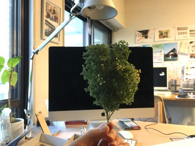 20161216樹木4